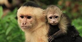 Reserva Gumbalimba y santuario de animales