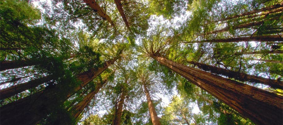 Visita Muir Woods durante tu crucero a San Francisco