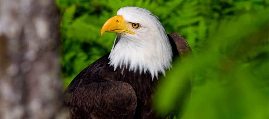 Avistamiento de aves en tu crucero por Alaska
