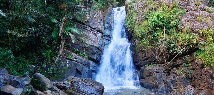 Selva tropical en San Juan