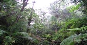 Paseo por el bosque pluvial El Yunque