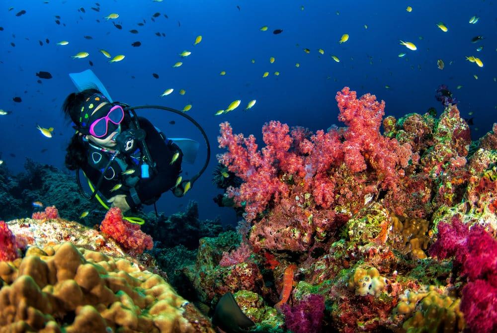Scuba Diving in Costa Maya with Norwegian