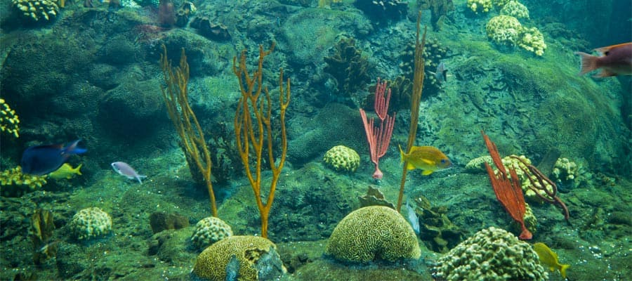 Colorido arrecife de coral en tu crucero a Tampa