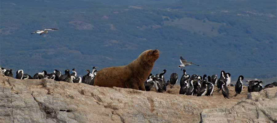 Leones marinos en Tierra del Fuego