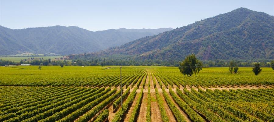 Mira los viñedos chilenos en tu crucero a Santiago