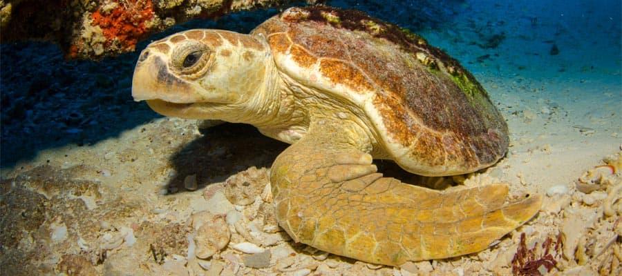 Tortugas marinas en un crucero por la Riviera Mexicana