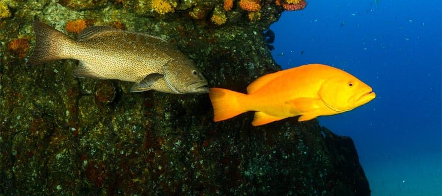 Sumérgete para ver los peces coloridos