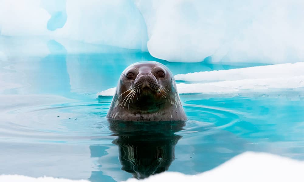 Vida silvestre de la Antártida