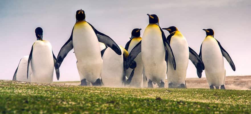 Stanley, Islas Falkland