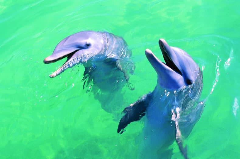 Nada con los delfines