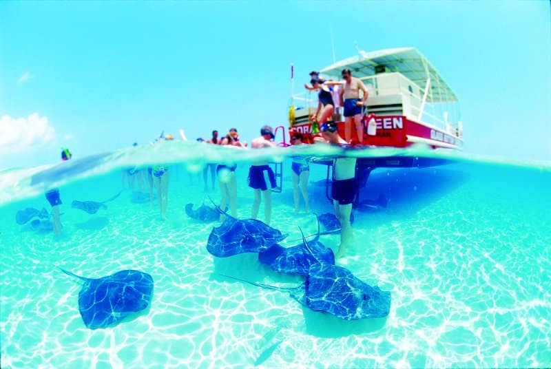 Stingrays in Cayman Islands