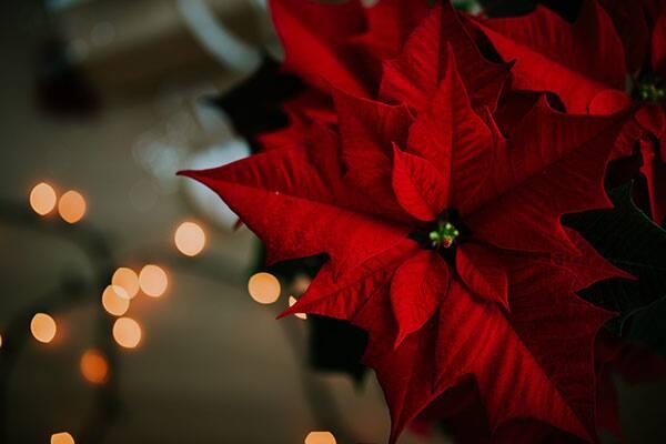 Hermosa decoración navideña