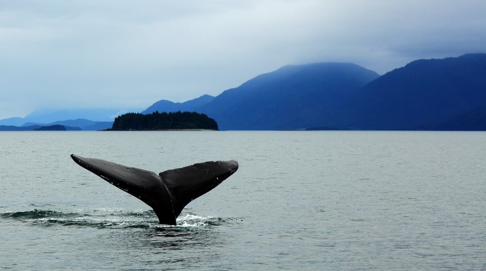 See Alaska's Wildlife on a Cruise with Norwegian